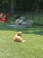 Shrewsbury Dog2