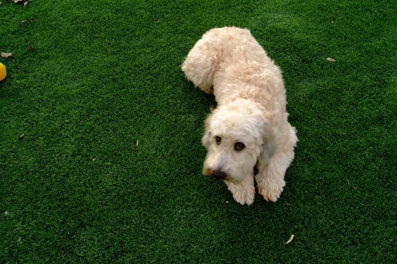 Pet Friendly Synthetic Grass